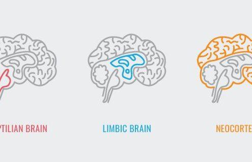 انواع مغز خزنده عاطفی منطقی